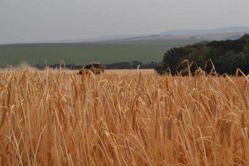 Região de Guarapuava, Paraná diminui área de trigo e soja e aumenta no plantio de milho e cevada