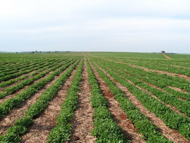 Controle da palhada para a implantação da cultura da soja é fundamental