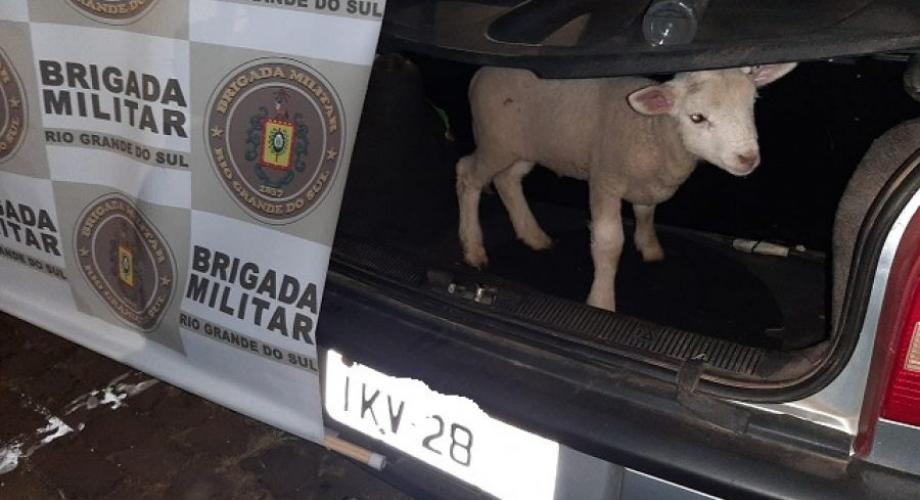 Brigada Militar prende dois e recupera cordeiro furtado no interior de Soledade
