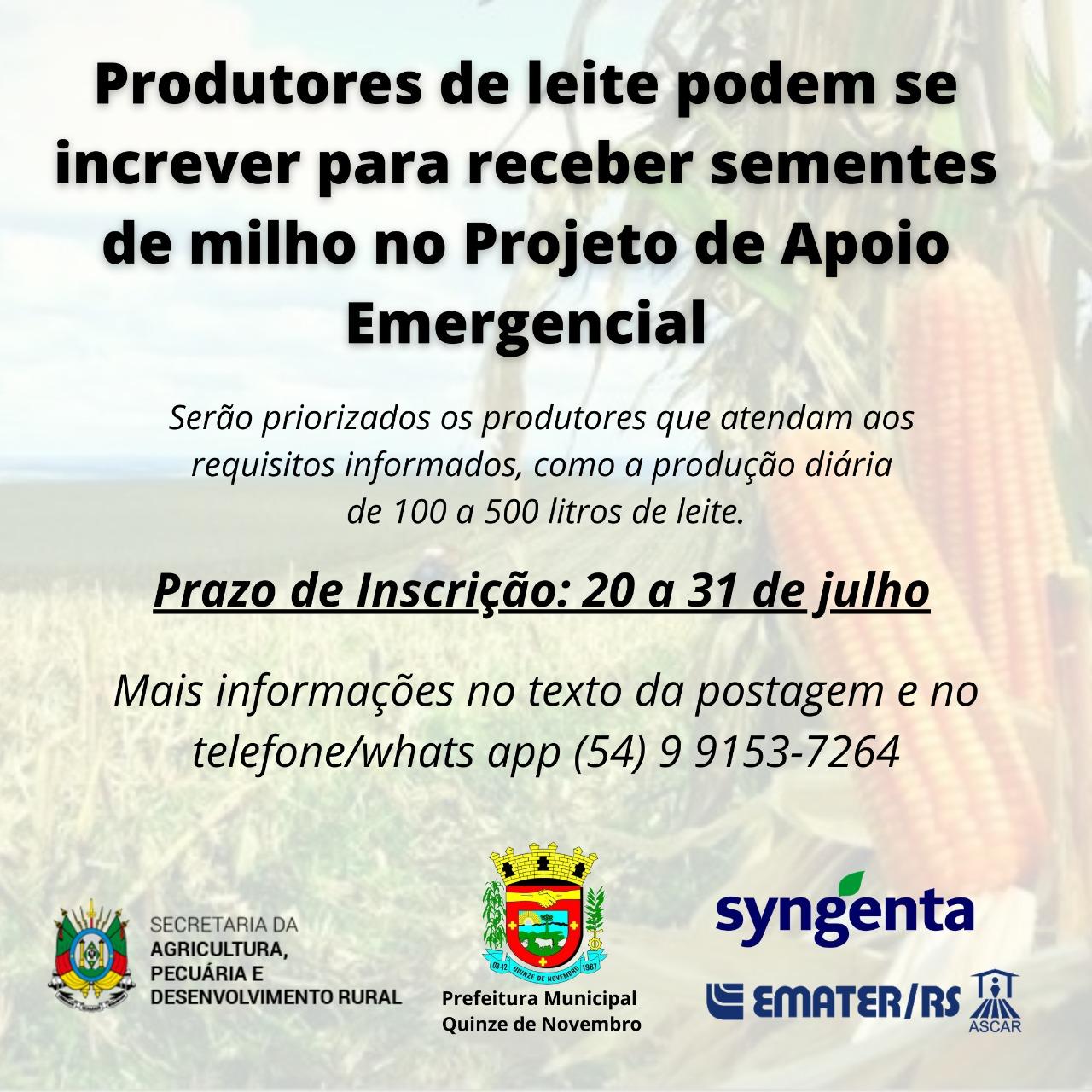 Produtores de leite de XV de Novembropodem se inscrever para receber sementes de milho no Projeto de Apoio Emergencial