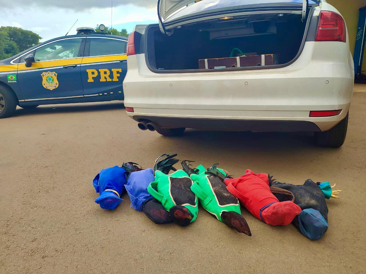 PRF de Sarandi prende prefeito paranaense transportando galos de rinha em veículo oficial da Prefeitura