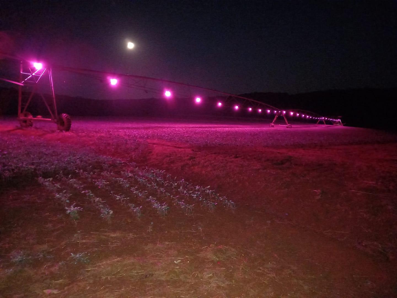 Com trabalho pioneiro na região, irrigação luminosa apresenta primeiros resultados no RS