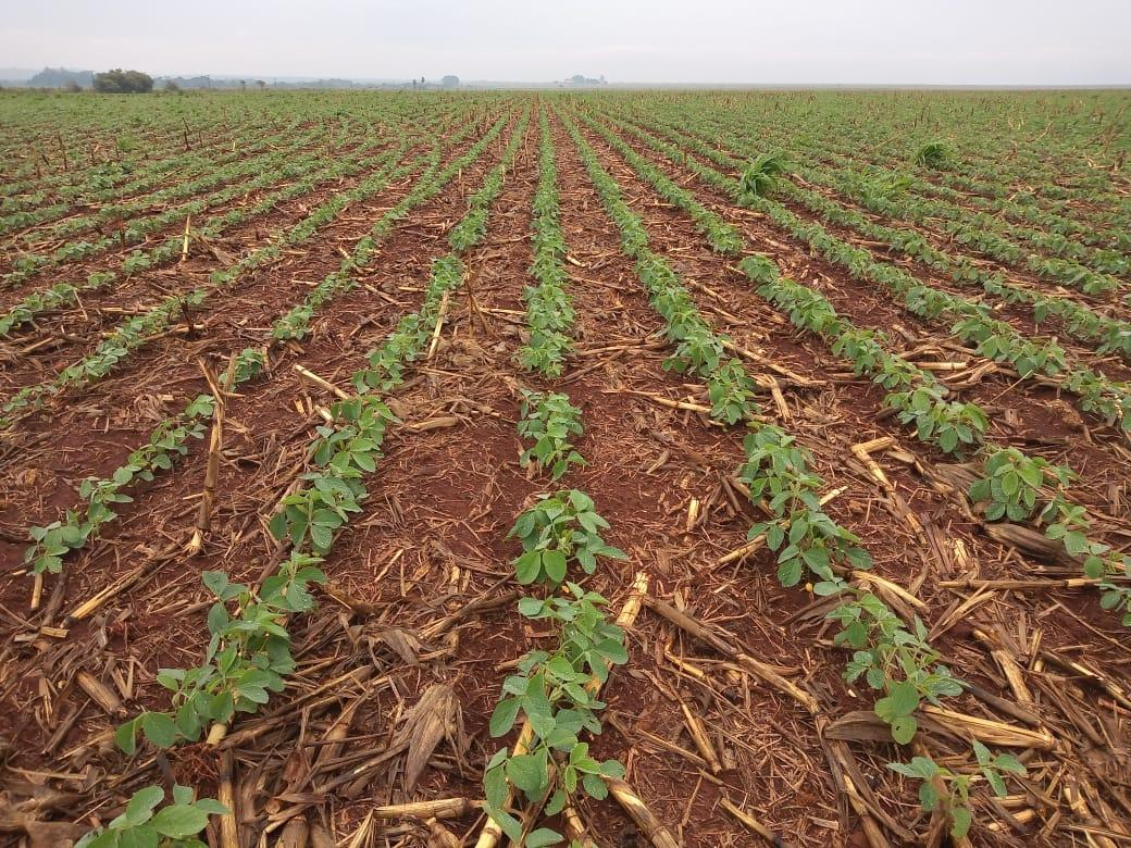 Teste para determinar produtividade de soja no Brasil será feito no Rio Grande Sul