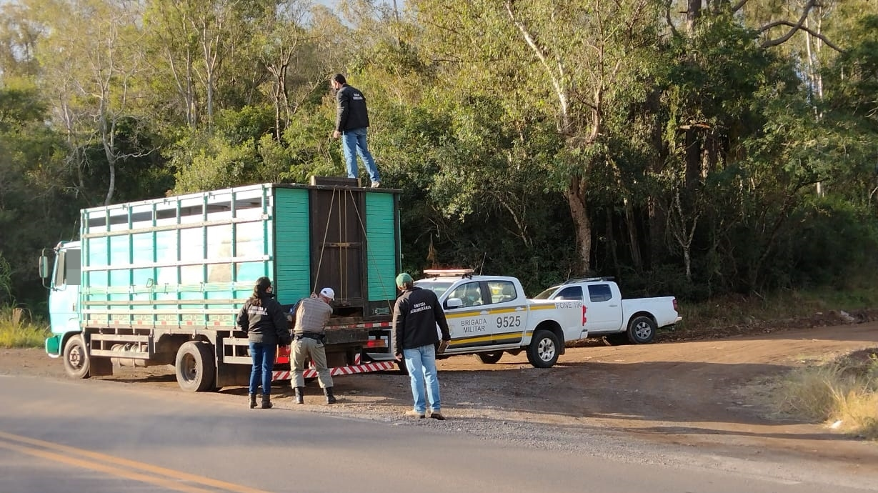 Operação conjunta entre Brigada Militar e inspetoria em Sobradinho com o foco no transporte de animais