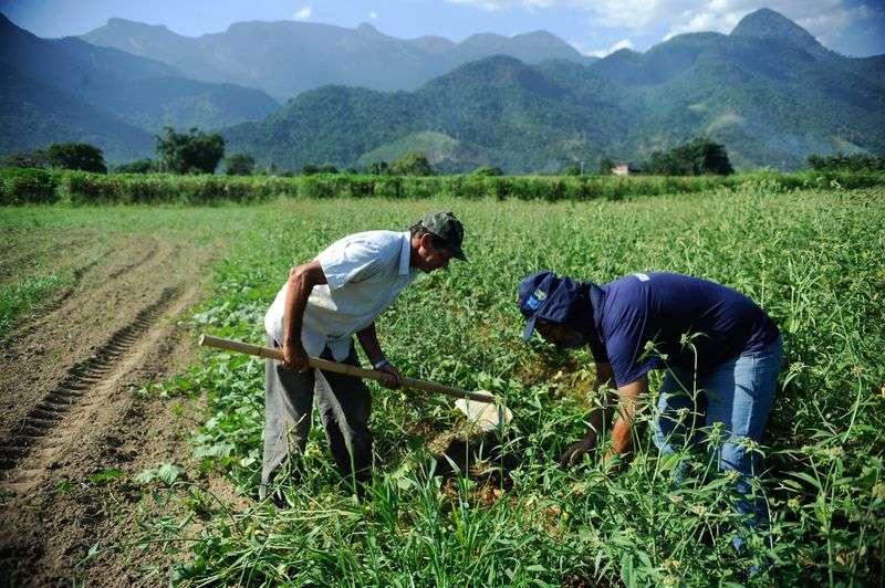 Câmara aprova projeto de socorro a agricultores familiares na pandemia