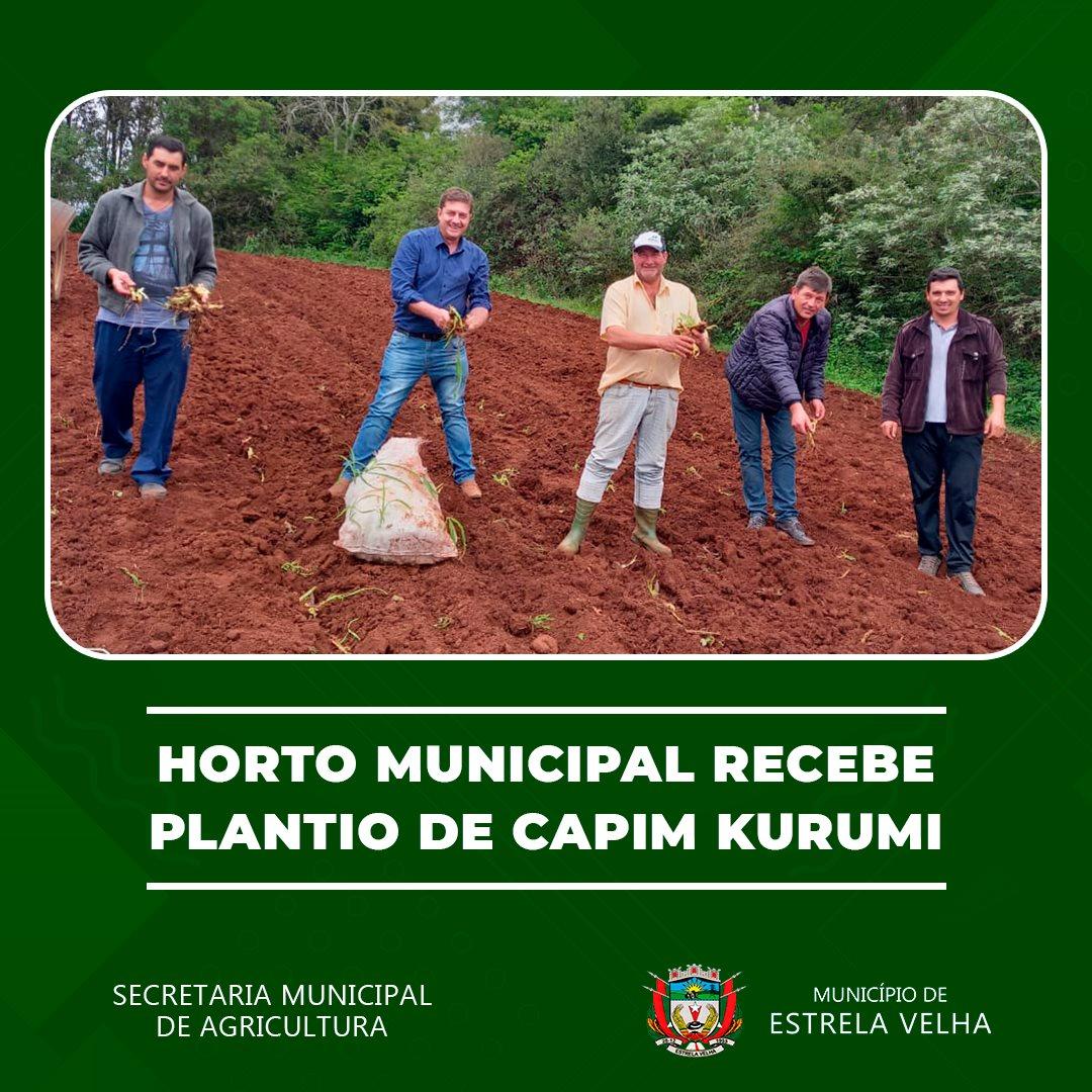Realizado plantio de Capim Kurumi no Horto Municipal de Estrela Velha