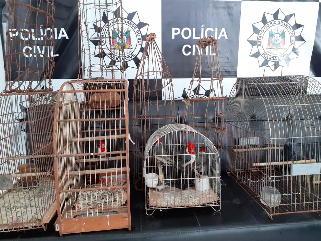 Aves silvestres são encontradas em residência no interior de Espumoso