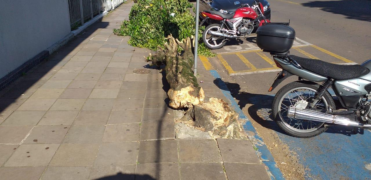 Corte de árvores no Centro gera indignação da comunidade de Soledade