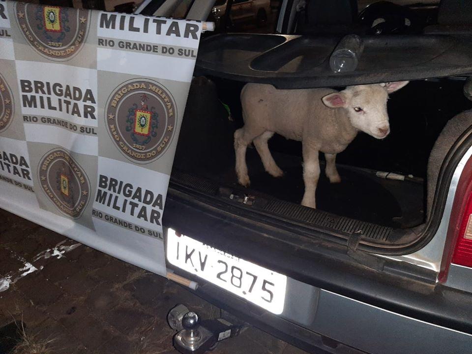 Brigada Militar registra furto abigeato no interior de Soledade