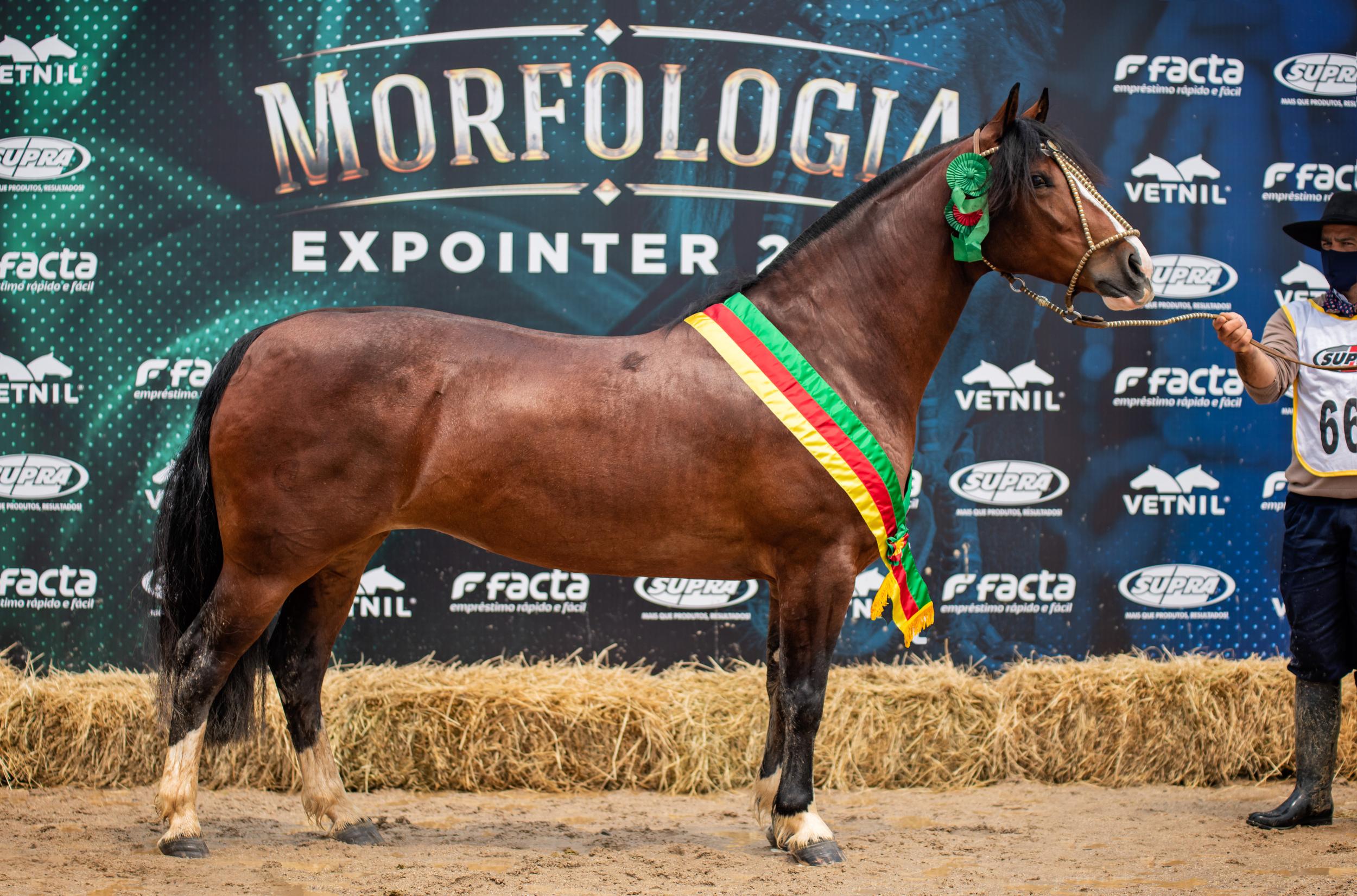 Cavalo Crioulo apresenta seus campeões da Expointer Digital 2020