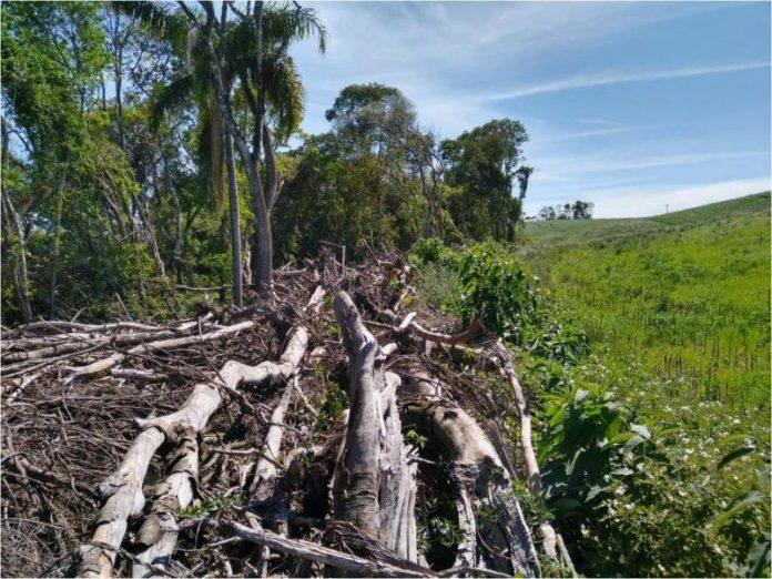 Operação Mata Atlântica em Pé identifica 335,9 hectares de áreas desmatadas ilegalmente no RS
