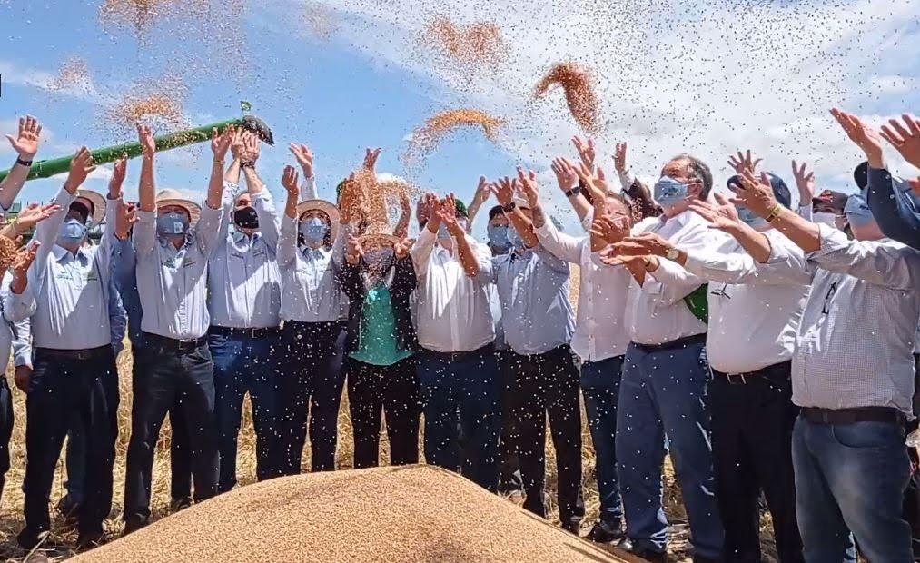 Otimismo marca abertura oficial da colheita do trigo no Rio Grande do Sul