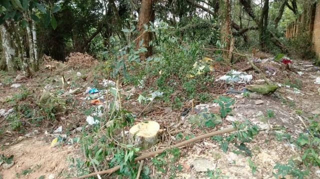 Proprietário de terreno diz que árvores nativas são cortadas, em Soledade, em virtude de limpeza