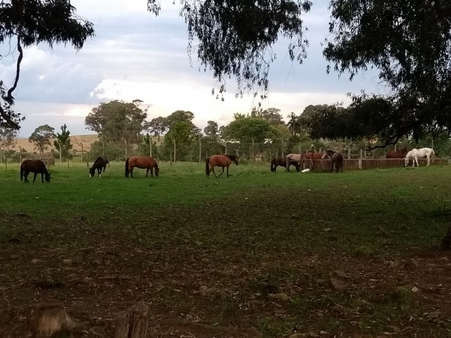 Departamento do Meio Ambiente de Soledade recolhe cavalos que invadiram propriedade rural