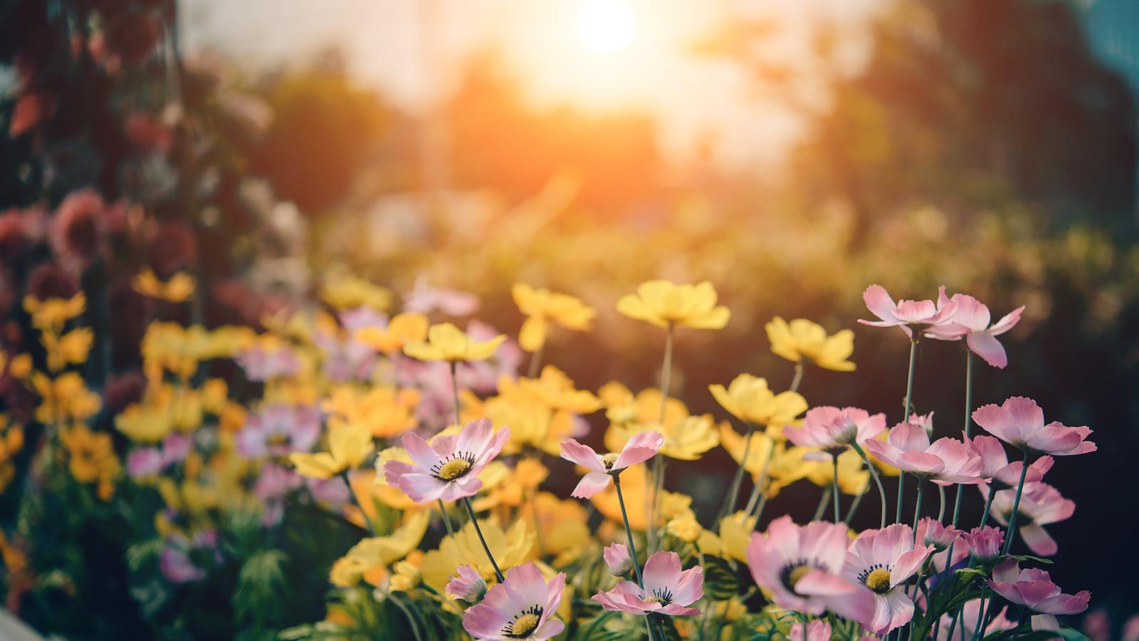 Primavera inicia nesta terça-feira no hemisfério sul