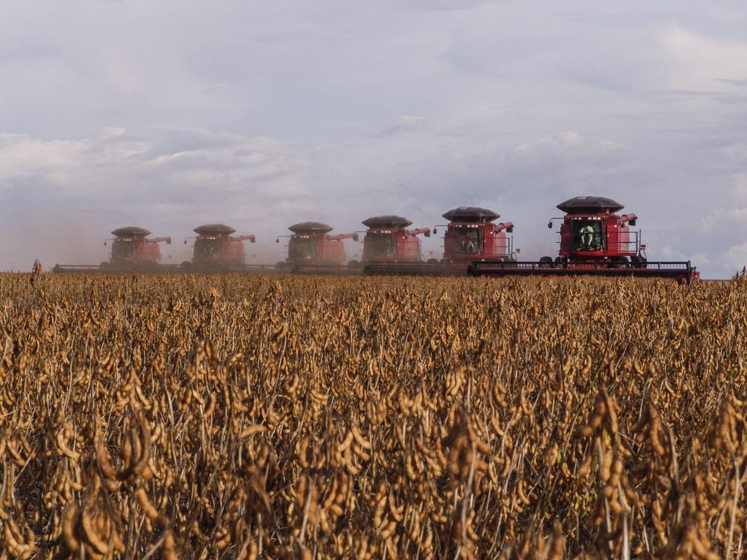 Rio Grande do Sul atrasa colheita de soja após efeitos climáticos