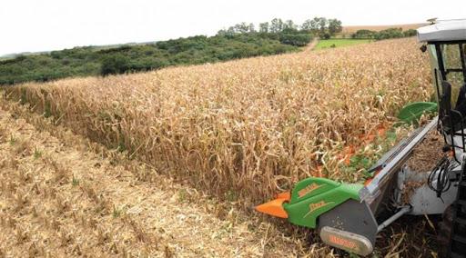 Colheita do milho avança para 48% no Rio Grande do Sul