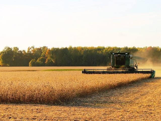 Primeiras lavouras de soja colhidas apresentam bons números