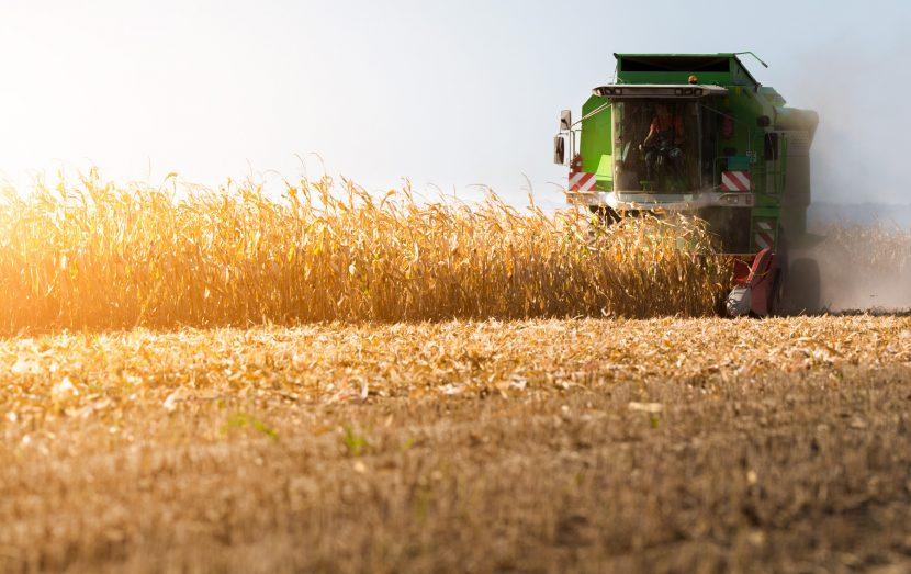 Colheita do milho no município de Não Me Toque está concluída
