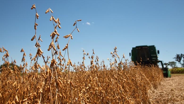 Produtores de soja possuem bons rendimentos com a oleaginosa