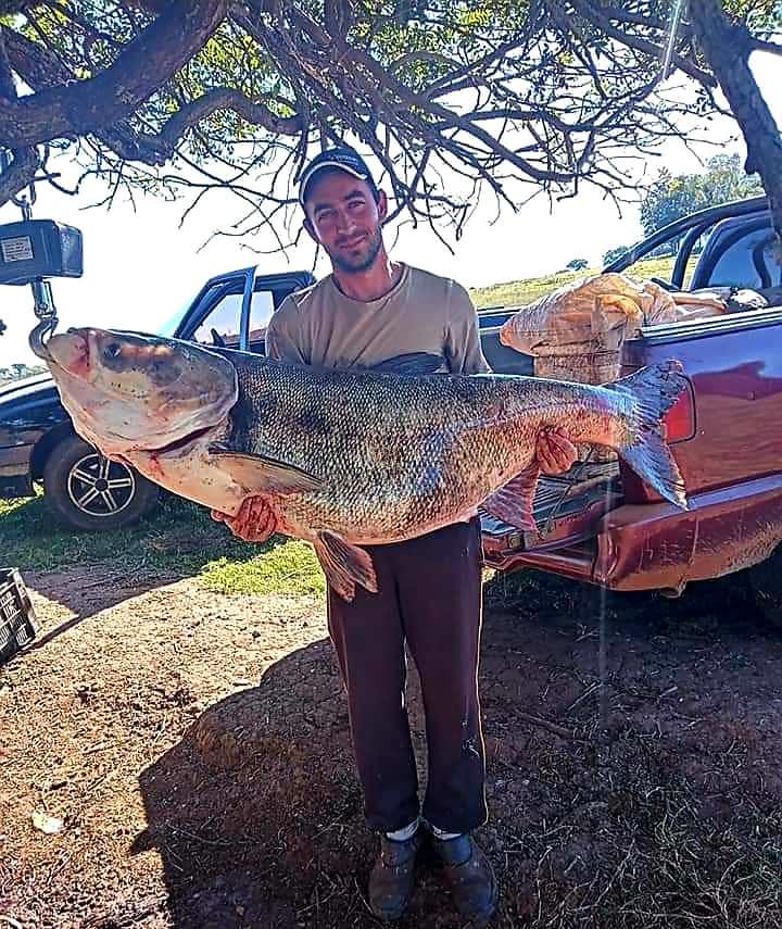 Peixe de 51 kg é pescado no Lago Passo Real em Quinze de Novembro