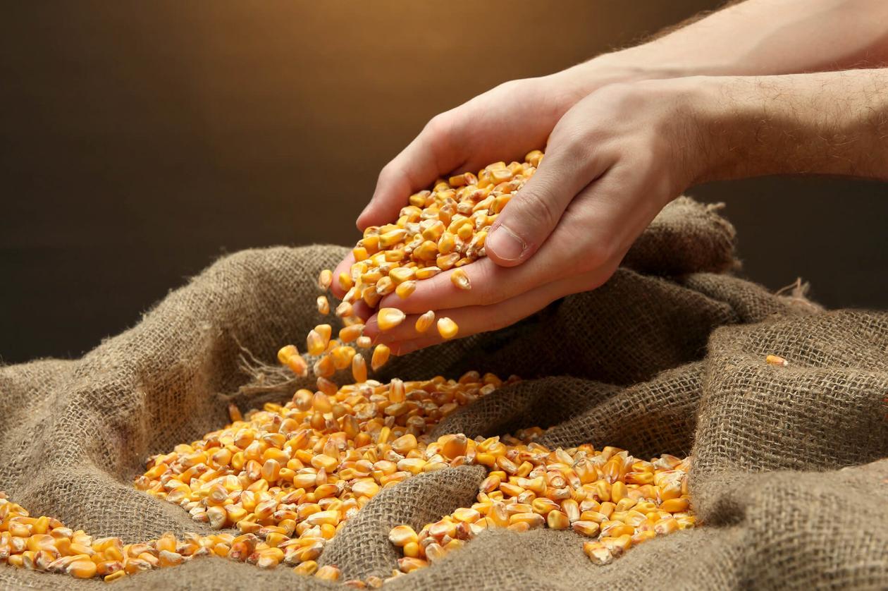 Decreto estadual adia cobrança de ICMS sobre importação de milho do Mercosul