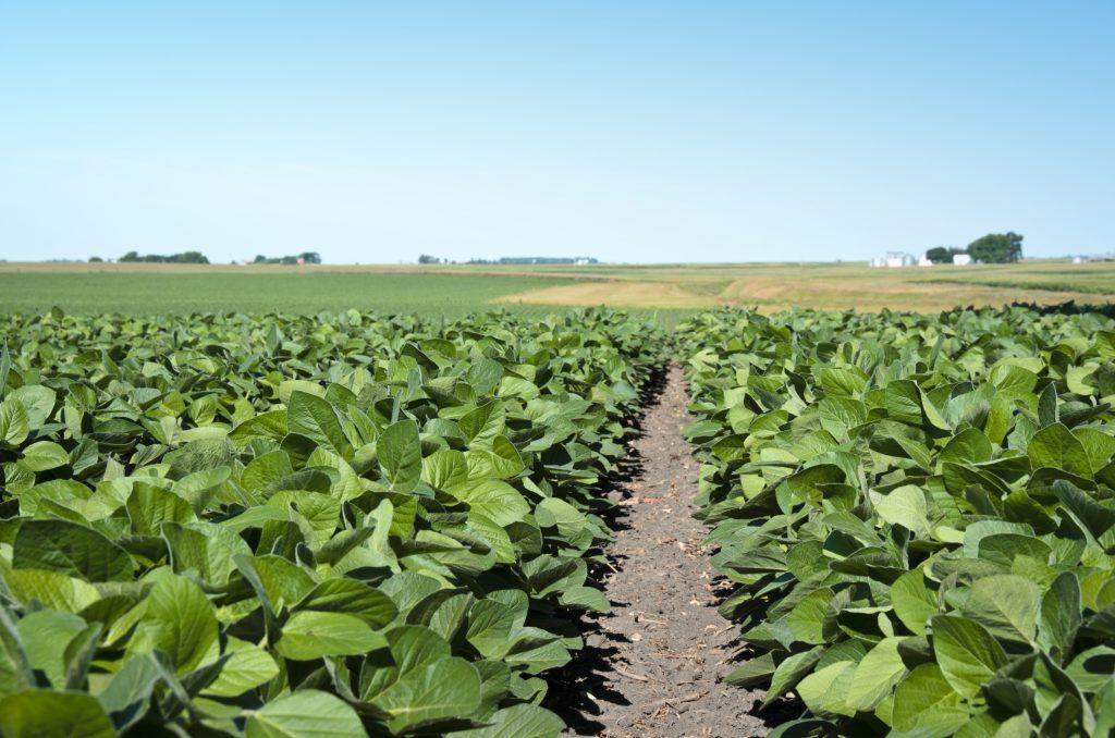 Sicredi fortalece o compromisso com a agricultura familiar no RS