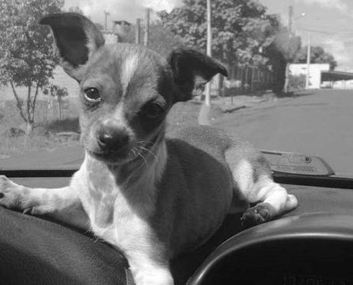 Polícia Civil indicia homem por maus-tratos após morte de cachorro em Horizontina
