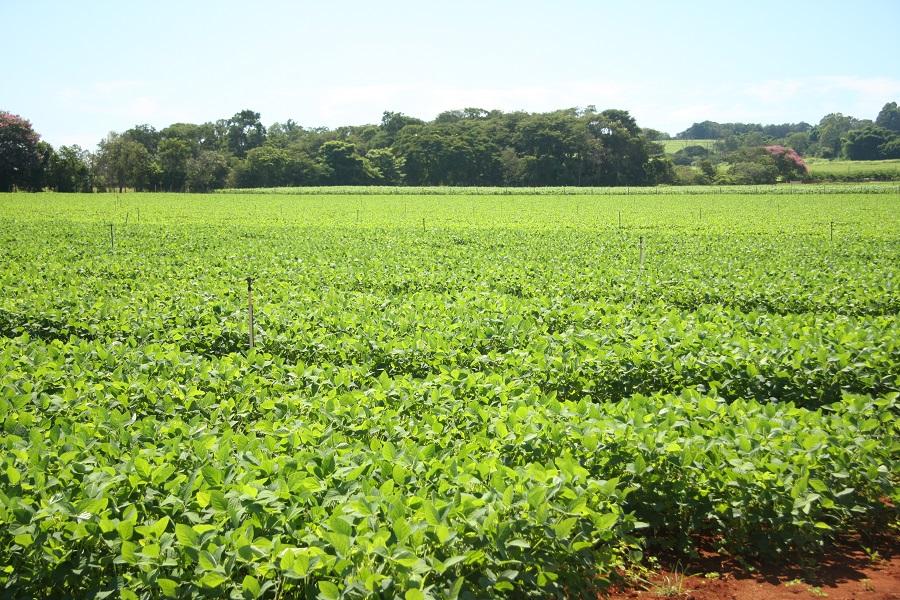 Cotrijal investe no monitoramento da presença da ferrugem em lavouras da região