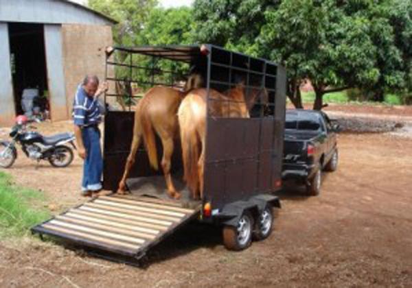 Fiscalização cobra guia no transporte de animais