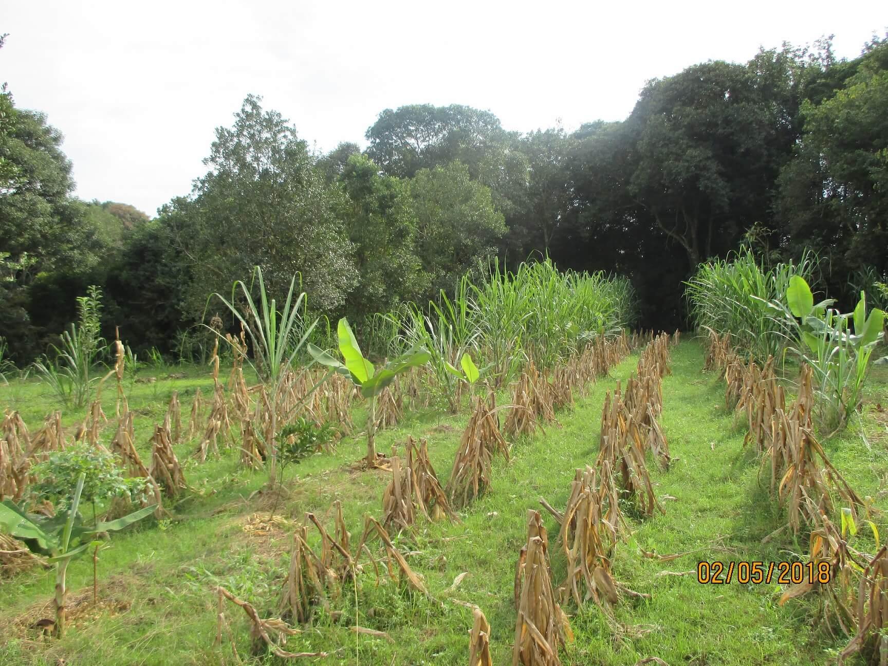 Não-Me-Toque tem primeiro Sistema Agroflorestal certificado