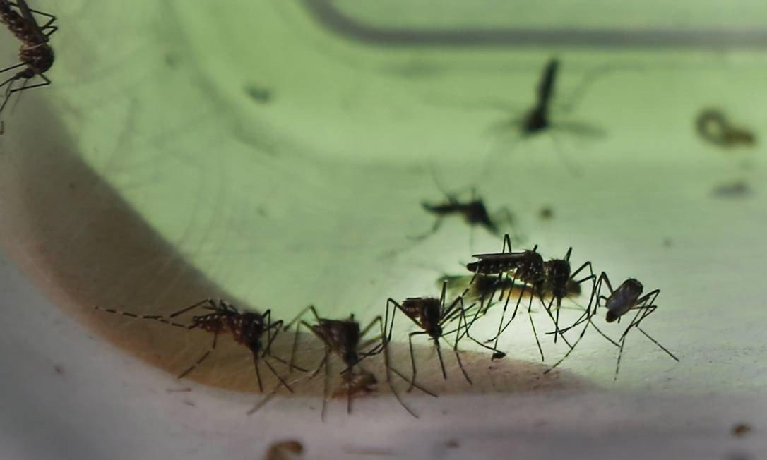 Não-Me-Toque é o 7º município com maior risco de de transmissão de dengue, zika e chikungunya no estado