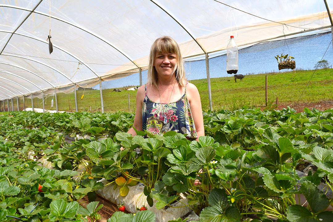 Agricultora usa homeopatia para produzir morango
