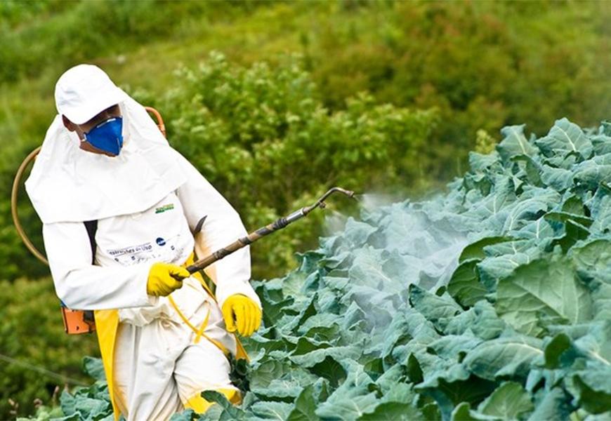 Em dez anos, país teve mais de 2,5 milhões de pessoas intoxicadas por agrotóxicos, diz pesquisadora